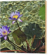 Pond Florals Wood Print