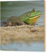 Pond Frog 2 Wood Print