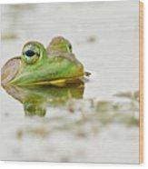 Pond Frog 4 Wood Print
