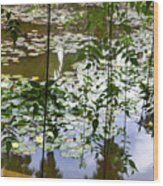 Pond In Marrakesh Wood Print