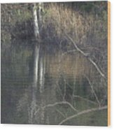 Pond In The Hollow Wood Print