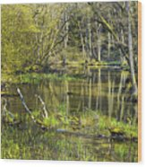Pond In The Undergrowth. Wood Print