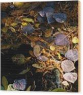 pond leaves RIV M 23 Wood Print
