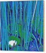 Pond Lily 6 Wood Print
