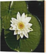 Pond Lily Wood Print