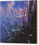 Pond Reeds At Sunset Wood Print