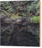 Pond Reflections -- Tongass National Forest Alaska Wood Print