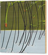 Pond Skaters Wood Print