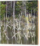 Pond Sticks Wood Print