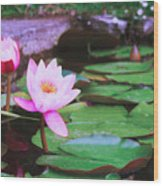 Pond With Water Lilly Flowers Wood Print