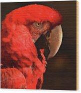 Pondering Parrot Wood Print