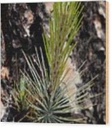 Ponderosa Pine 9 Wood Print