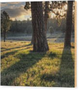 Ponderosa Pine Meadow Wood Print