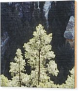 Ponderosa Pines Wood Print
