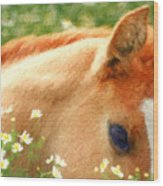 Pony In The Poppies Wood Print