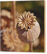 Poopy Seed Pod... Wood Print