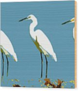Pop Egrets Wood Print
