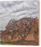 Pop Of Orange Wood Print