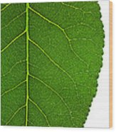 Poplar Leaf A Key To Biofuels Wood Print