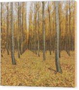 Poplar Tree Farm In Oregon Wood Print
