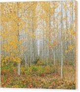 Poplar Tree Grove In Fall Wood Print