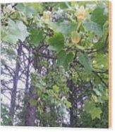 Poplar Tulip Tree Wood Print