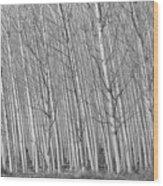 Poplars Beauty Trees Wood Print