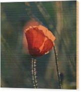 Poppiemania IIi Wood Print