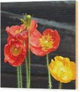 Poppies 17-01 Wood Print