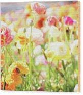Poppies 3 Wood Print