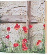 Poppies Against Wall Wood Print