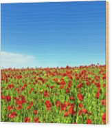 Poppies And A Photographer Wood Print