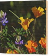 Poppies And Bluebells Wood Print