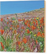 Poppies And Fiddleneck In Antelope Valley Ca Poppy Reserve Wood Print