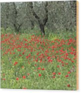 Poppies And Olives Wood Print