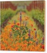 Poppies And Wildflowers In Vineyard Wood Print