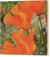Poppies Antelope Valley Wood Print