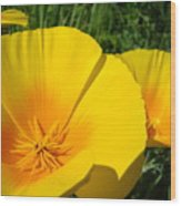 Poppies Art Poppy Flowers 4 Golden Orange California Poppies Wood Print