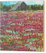 Poppies At Cedar Point Wood Print