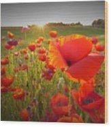 Poppies At Sunset Wood Print