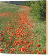 Poppies Awash Wood Print