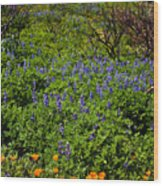 Poppies Before Lupines Wood Print