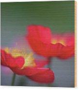 Poppies Edges Wood Print