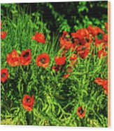 Poppies Flowerbed Wood Print