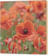 Poppies H Wood Print