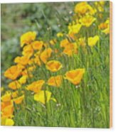 Poppies Hillside Meadow Landscape 19 Poppy Flowers Art Prints Baslee Troutman Wood Print