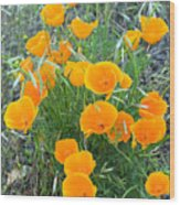 Poppies II Wood Print