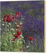 Poppies In Lavender Wood Print
