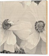 Poppies In Monochrome Wood Print