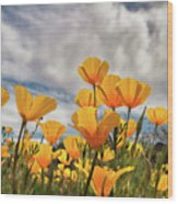Poppies In The Wind Part Two  Wood Print